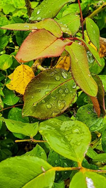 Colpo verticale del primo piano di una pianta verde fresca con gocce d'acqua su di esso Foto Gratuite