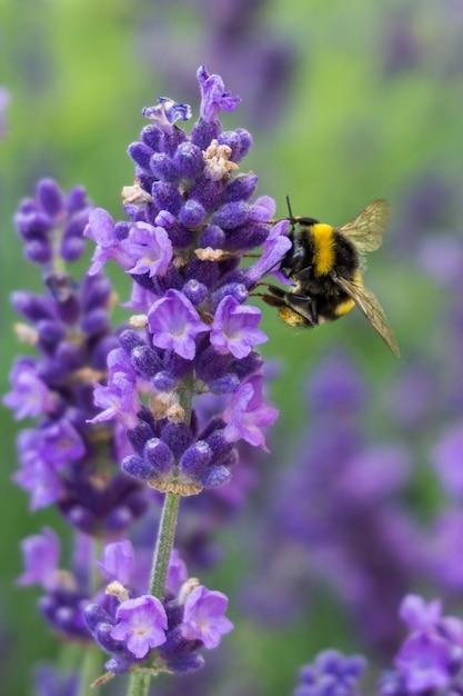 背景に緑とラベンダーの花の蜂の垂直クローズアップショット 無料写真