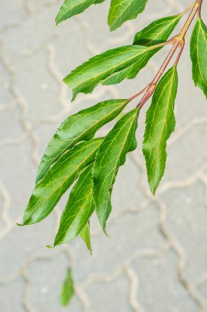 緑の葉とぼやけた石畳の地面の下にある枝の垂直クローズアップショット 無料写真