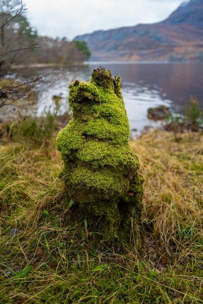 スコットランド、ハイランドのマリー湖で苔で覆われた切り株の垂直クローズアップショット 無料写真