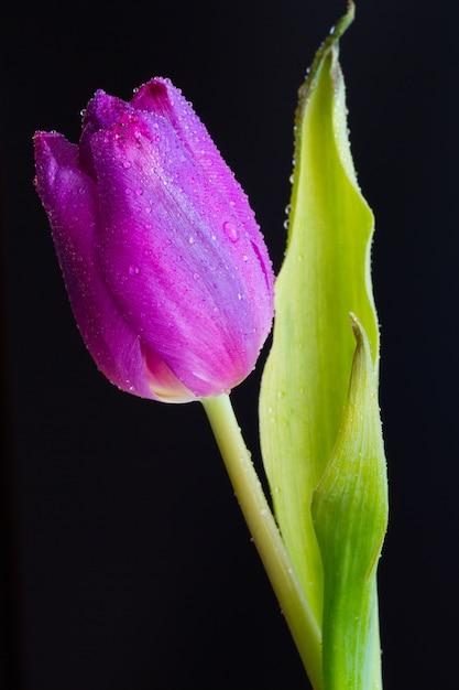 Вертикальный снимок мокрого бутона розового тюльпана на темноте крупным планом Бесплатные Фотографии