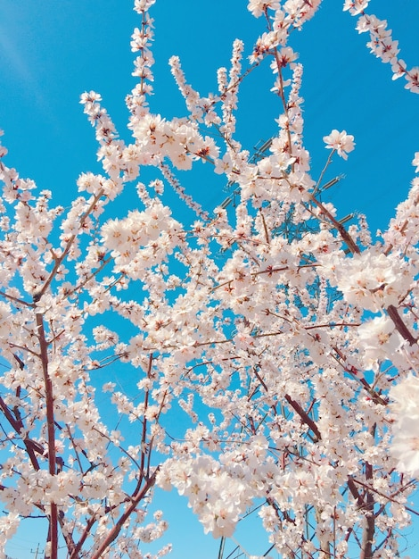 青い空を背景に美しい桜の垂直クローズアップショット 無料写真
