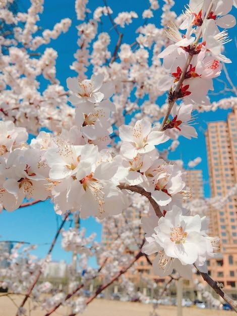 ぼやけた桜の垂直クローズアップショット 無料写真