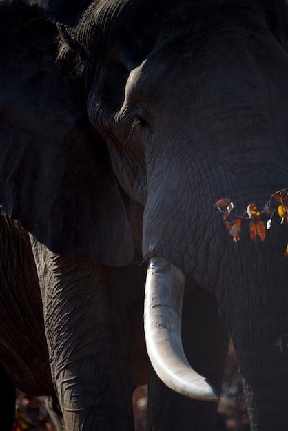 巨大なアフリカ象の垂直のクローズアップショット 無料写真