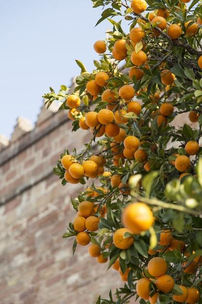 れんが造りの建物と木に熟したオレンジの垂直のクローズアップショット 無料写真