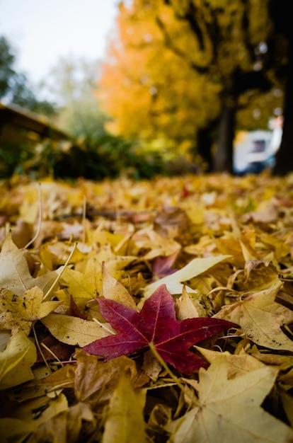 Colpo verticale del primo piano delle foglie degli alberi rossi e gialli ammucchiati sul terreno Foto Gratuite