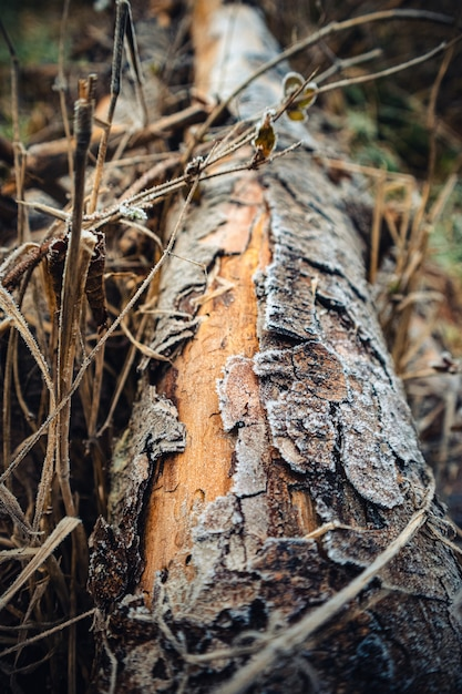 Vertical closeup of a tree trunk surrounded by branches under the sunlight Free Photo