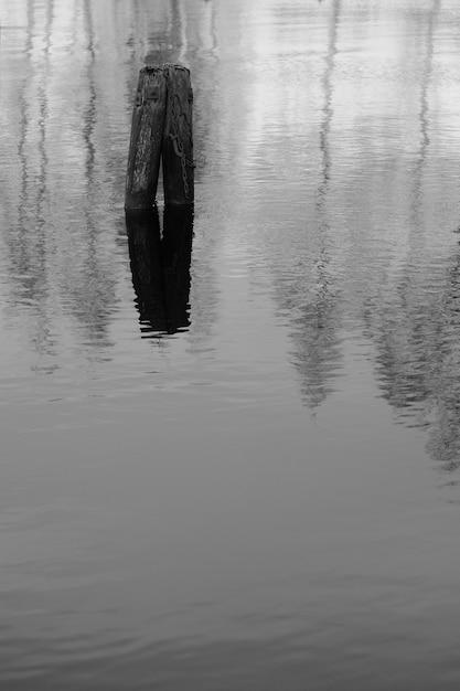 湖の2本の木の丸太の反射の垂直グレースケールショット 無料写真