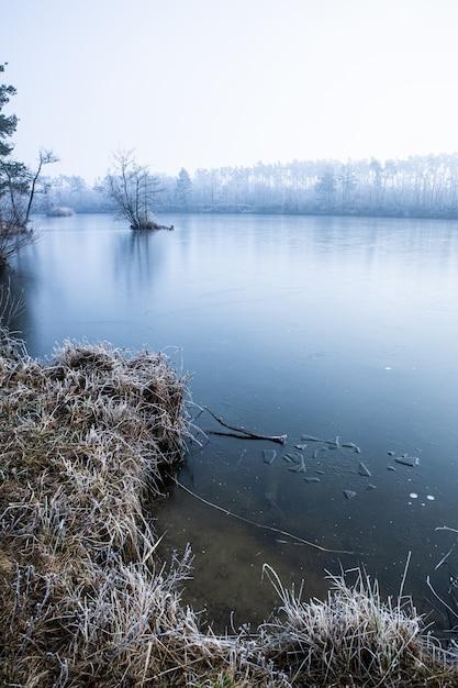 Вертикальный снимок с большим углом сухой травы и голых деревьев у озера, покрытого туманом зимой Бесплатные Фотографии