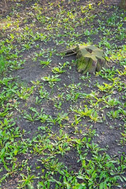 土壌に生えている新緑の植物の垂直ハイアングルショット 無料写真