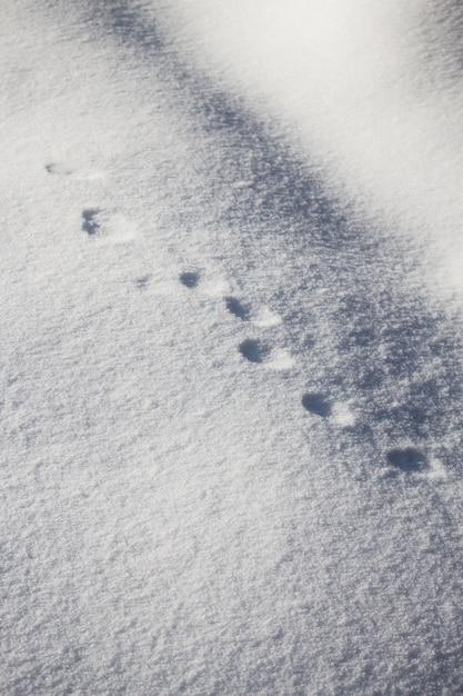 雪の上の丸い動物の足跡の垂直高角度ショット 無料写真