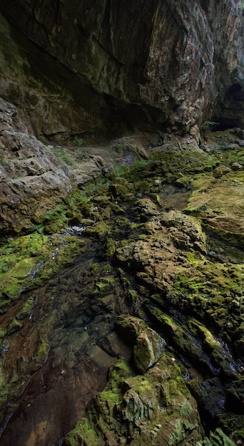 クロアチア、スクラードでキャプチャされた苔で覆われた岩の垂直ハイアングルショット 無料写真