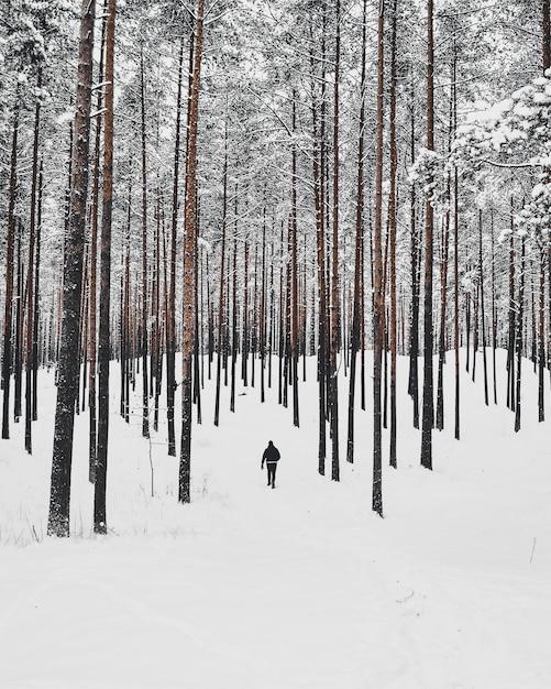 Colpo verticale ad alto angolo di una persona che cammina nella foresta innevata con alberi ad alto fusto Foto Gratuite