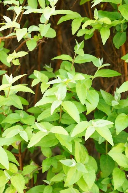 植物の緑の葉の垂直方向の画像 無料写真