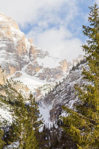 눈으로 덮여 산의 수직 풍경 무료 사진