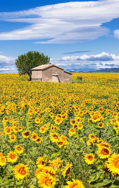 Вертикальный пейзаж с полем подсолнечника над пасмурным голубым небом Бесплатные Фотографии