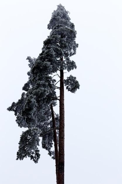 明るい空を背景に美しい背の高い木の垂直ローアングルショット 無料写真