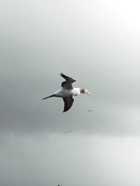 曇りの日に空を飛んでいるカモメの垂直ローアングルショット 無料写真