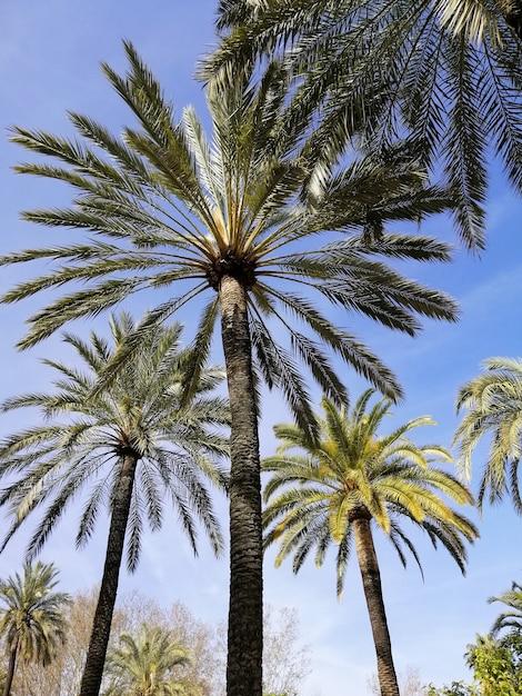 Вертикальный снимок пальм с низким углом под голубым небом Бесплатные Фотографии