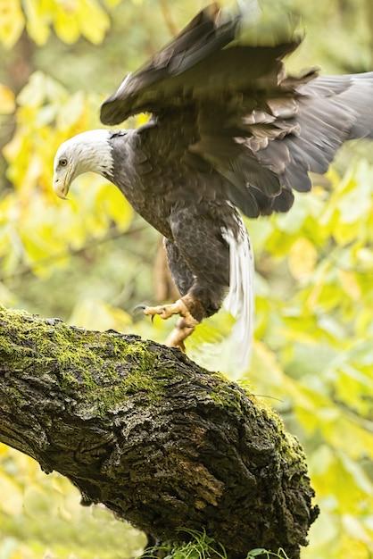 Immagine verticale di un'aquila calva in volo immersa nel verde sotto la luce del sole Foto Gratuite
