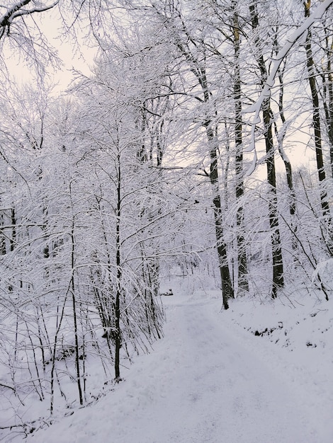 ノルウェーの日光の下で雪に覆われた木々に囲まれた森の垂直方向の写真 無料写真