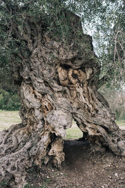 Вертикальное изображение коры старых деревьев в поле, окруженном зеленью Бесплатные Фотографии