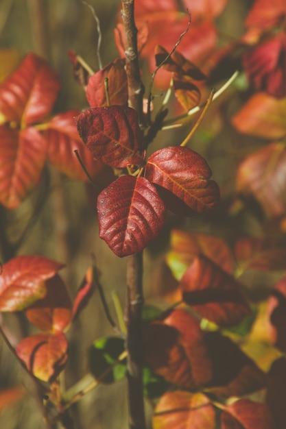 Вертикальная картина красных листьев в саду под солнечным светом Бесплатные Фотографии