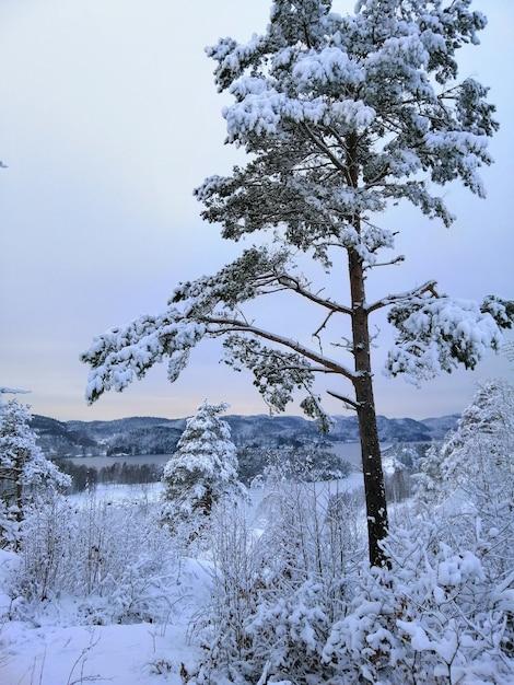 ノルウェーのラルヴィークの雪に覆われた森の木々の垂直方向の画像 無料写真