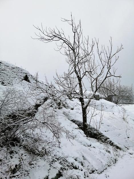 Вертикальное изображение деревьев в лесу, покрытом снегом в ларвике в норвегии Бесплатные Фотографии