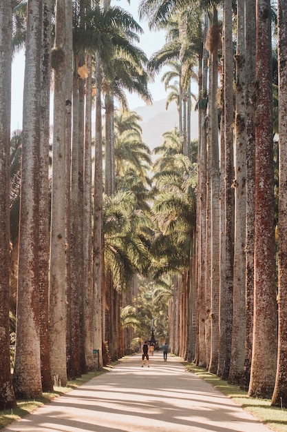 Vertical picture of a pathway surrounded by palm trees under the sunlight in rio de janeiro Free Photo