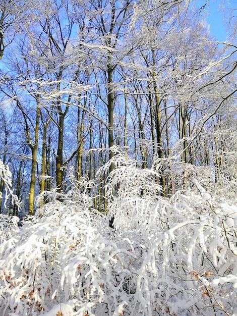Immagine verticale di alberi in una foresta coperta di neve sotto la luce del sole a larvik in norvegia Foto Gratuite
