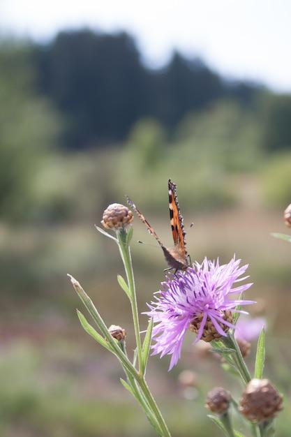 Hsot verticale del fuoco selettivo di una farfalla arancione su un fiore viola selvaggio Foto Gratuite