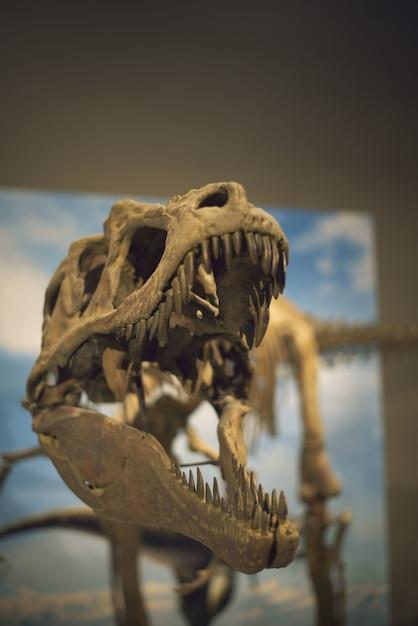 Colpo verticale del fuoco selettivo di uno scheletro di dinosauro catturato in un museo Foto Gratuite