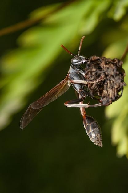 Вертикальный селективный фокус выстрел насекомого Бесплатные Фотографии