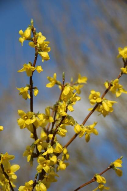 青空の下でレンギョウの花の垂直選択フォーカスショット 無料写真