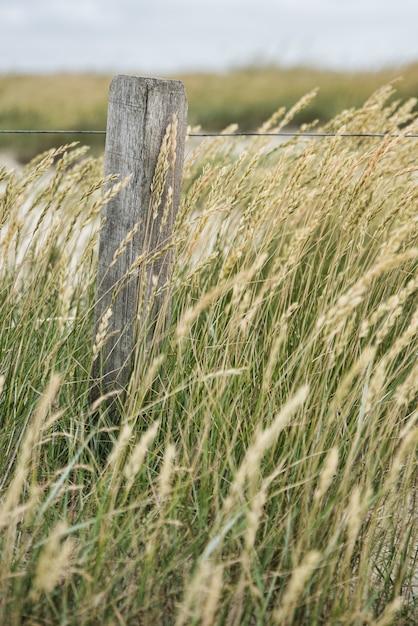 田舎のフィールドの真ん中に成長している小麦の穂の垂直方向のセレクティブフォーカスショット 無料写真