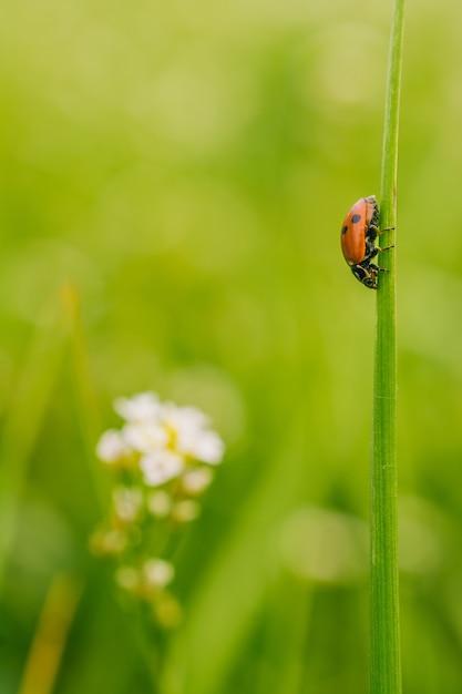 Вертикальный выборочный фокус вид жука божьей коровки на растении в поле, снятом в солнечный день Бесплатные Фотографии