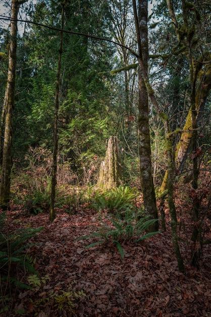 Colpo verticale di un bosco in autunno con alti alberi e foglie colorate Foto Gratuite
