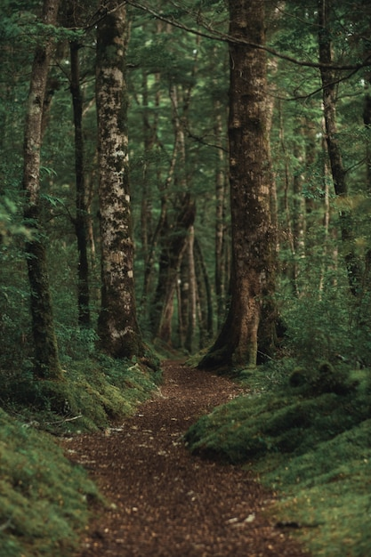 Vertical shot of a beautiful forest with a brown pathway in the middle Free Photo