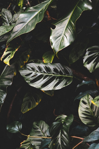 Vertical shot of beautiful green leaves in a tropical forest forest Free Photo