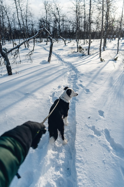 Vertical shot of a dog walking in the snow with a leash Free Photo