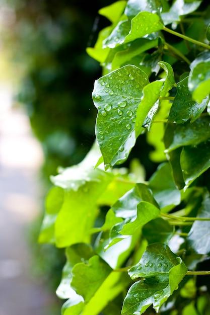 Colpo verticale di goccioline d'acqua su foglie verdi Foto Gratuite