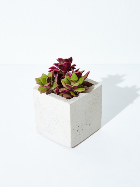 Vertical shot of a houseplant in a concrete flowerpot Free Photo