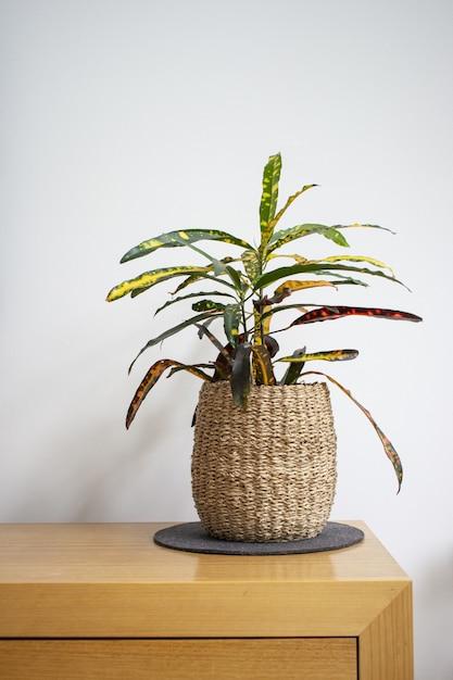 Colpo verticale di una pianta d'appartamento in un vaso di fiori intrecciati su un tavolo di legno contro un muro bianco Foto Gratuite