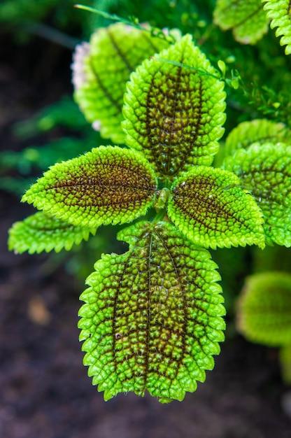 Colpo verticale delle foglie di una pianta verde in giardino Foto Gratuite