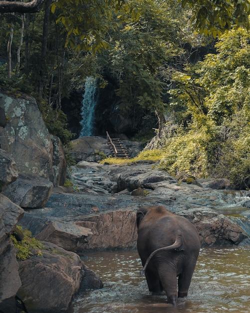 遠くに緑の木々がある池を歩いている象の赤ちゃんの垂直ショット 無料写真
