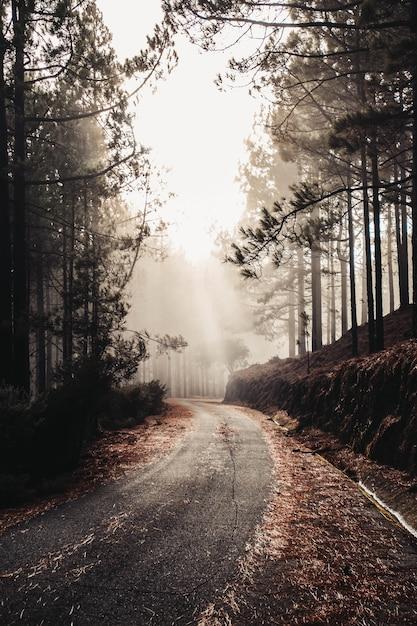 Вертикальный снимок красивой старой дороги в окружении скал и высоких деревьев - идеально подходит для обоев Бесплатные Фотографии