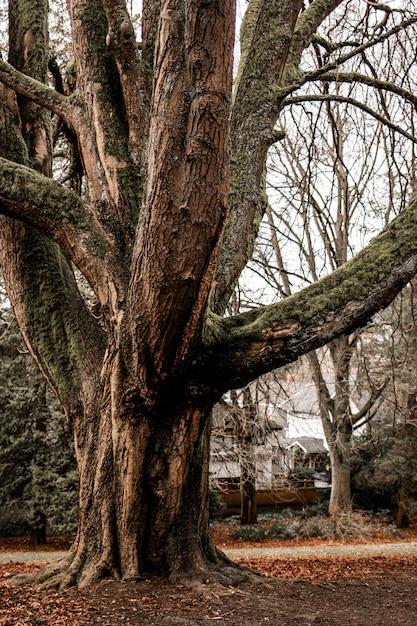 Вертикальная съемка большого старого дерева с белым небом Бесплатные Фотографии