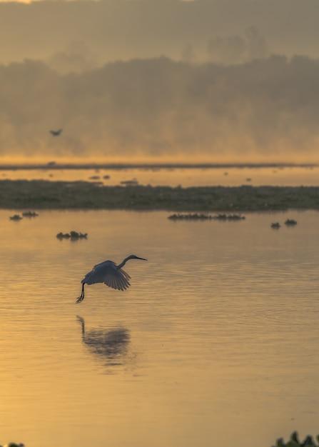 日没時に海の上を飛んでいる鳥の垂直ショット 無料写真