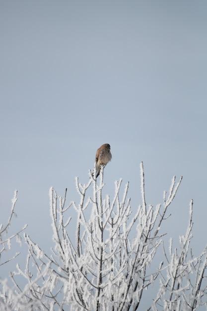 Вертикальный снимок коричневой птицы, отдыхающей на кончике ветки Бесплатные Фотографии